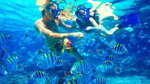 Puas berada di mercusuar Lengkuas, kita bisa snorkeling bercanda dengan ikan-ikan yang lucu.