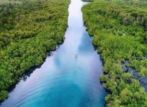 Mangrove Leebong Island
