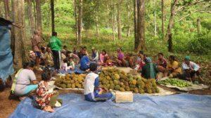 Nikmatnya Makan Durian Langsung di Kelekak Duren