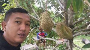 Durian Pulau Mendanau Yang terkenal akan manisnya